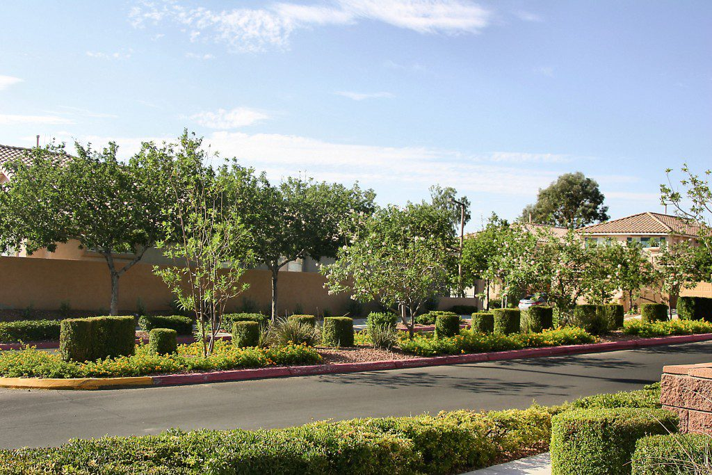 Street View along The Arbors Village in Summerlin