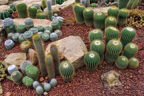 All About Springs Preserve In Las Vegas Nv