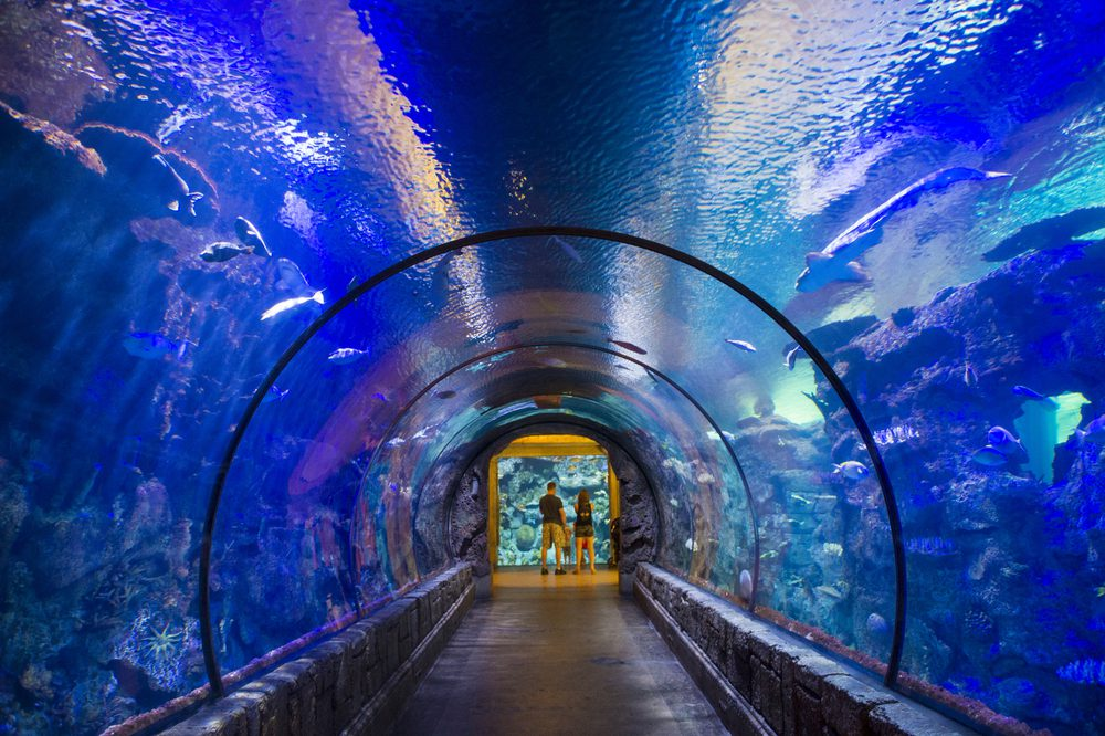 10 Things to do with Kids in Las Vegas