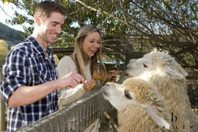 Valentines Zoos