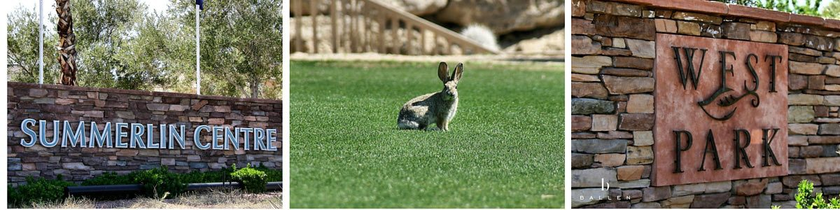 Rabbit in a park at Summerlin Centre Village