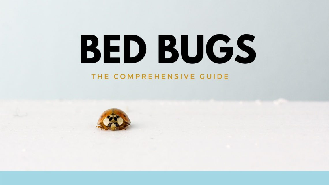 a lone bed bug is on a white background and the words bed bugs the comprehensive guide is appearing