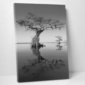 """Trees at Lake 2"" by Moises Levy Photographic Print Wrapped Canvas"