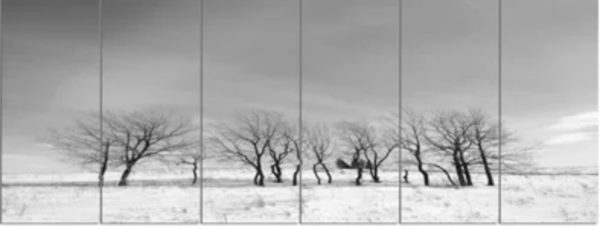 'Black and White Trees in Winter' 6 Piece Photographic Print Set on Canvas