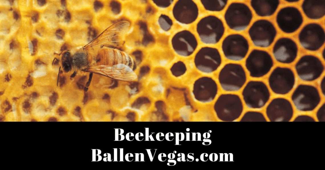 This short annotated bibliography provides a way to learn more about bees and the continued relationship we have with them.