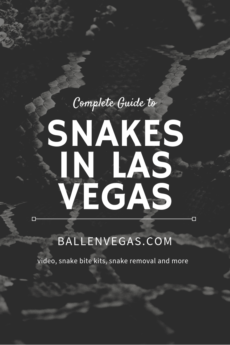 Most residents of Las Vegas are familiar with certain pests – spiders, lizards, and scorpions. But lately, Las Vegas has had an influx of what might be considered an unexpected creepy crawler – snakes.