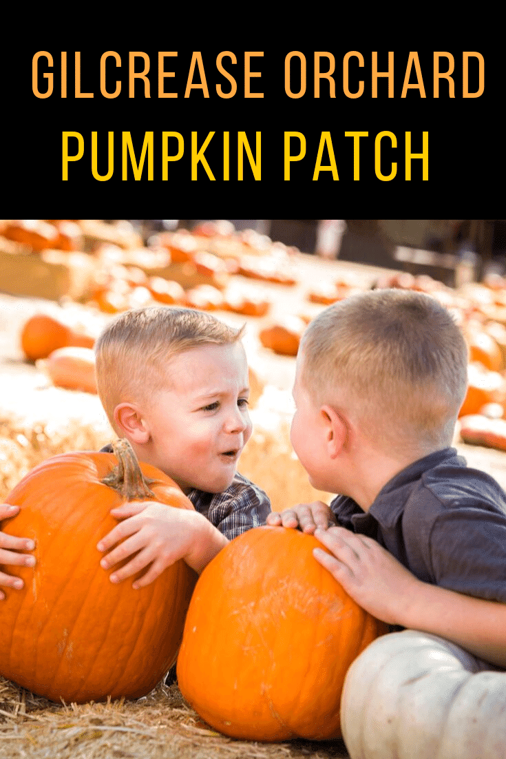 Gilcrease Orchard will be open for Pumpkin Picking on Sept. 28. Visitors can find their ideal pumpkin, enjoy a hay-ride, or partake in many snacks for sale including kettle corn, apple cider donuts, caramel apples, and more delights.
