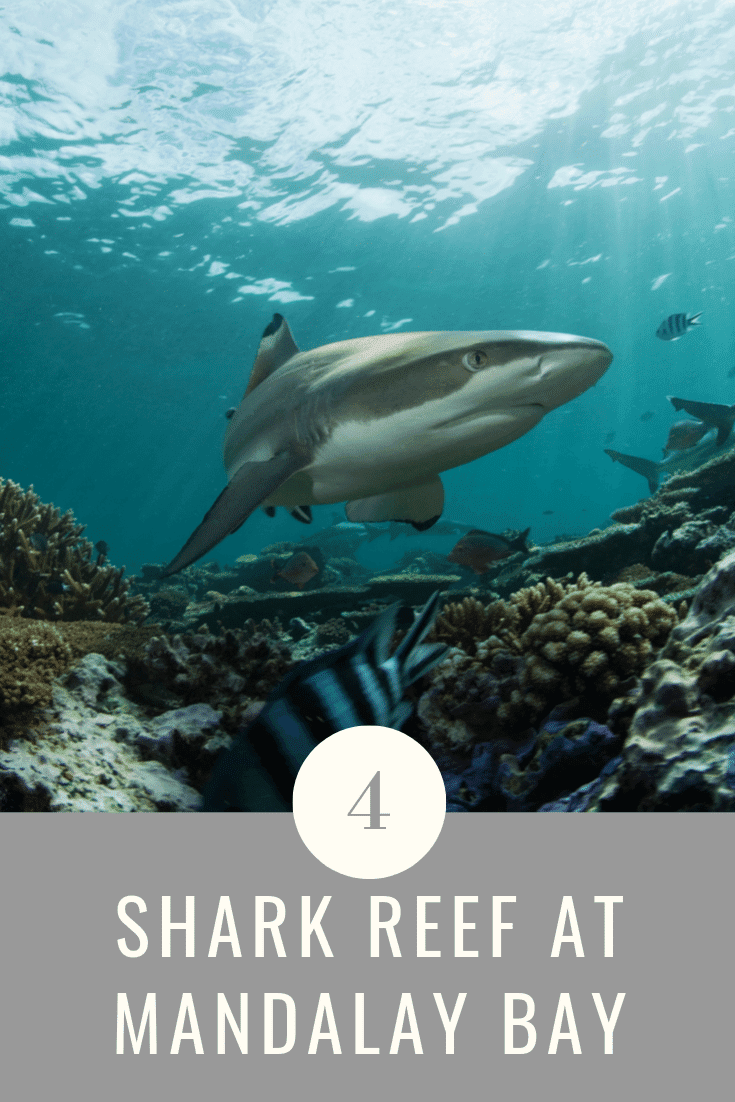 The shark reef offers over 1200 types of endangered species of fish, reptiles, and sharks. At the shark reef, you will enjoy a closer look of up to 100 sharks as you walk through two underwater tunnels.