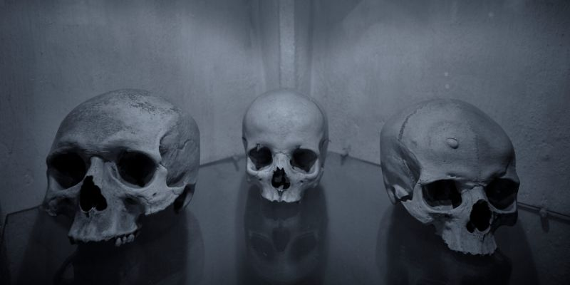 Walkthrough a hallway that is covered with nothing but skulls in glass cases and it sets the scene for the next chapter of odd and creepy that you're about to embark on.