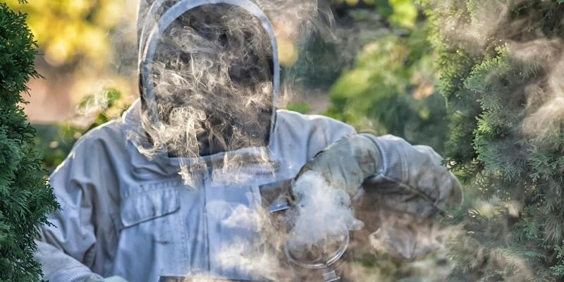 Nighttime is best because bees are usually inactive around this time. The smoke from the fire upsets them but doesn't necessarily harm them.