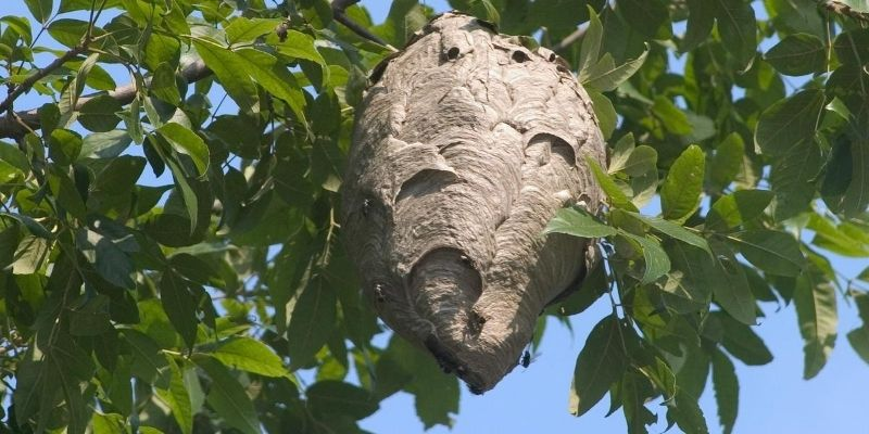 In your quest to get rid of bees, you need first to answer a precise question: what is the primary cause of the problem? Mostly, bees visit a place frequently in large numbers only when they have built a hive there.