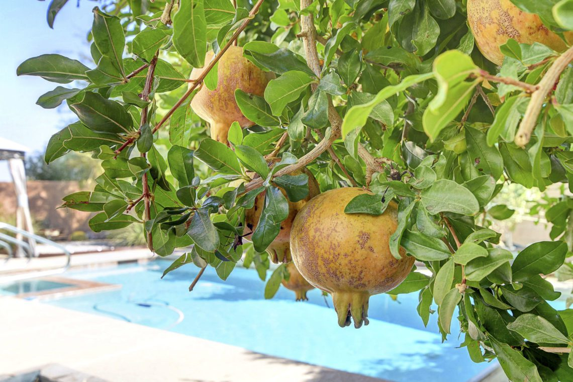 Live your gardening dreams with mature fruit trees right in your back yard (apples, oranges, grapes & pomegranates)! The pool and spa are just steps away from your covered patio in your very private backyard oasis!