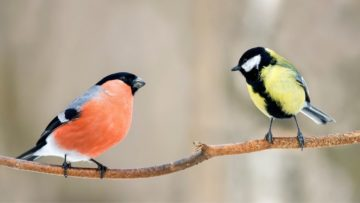Here are birds you can find in Las Vegas including migration, hard to find, and every day backyard varieties.